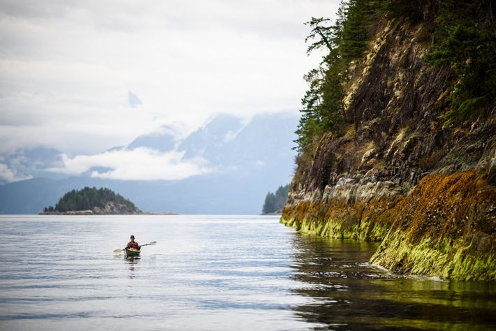 Paddling along the coastline of Desolation Sound at low tide will throw up all sorts of natural ...