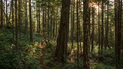 British Columbia: following a forest path