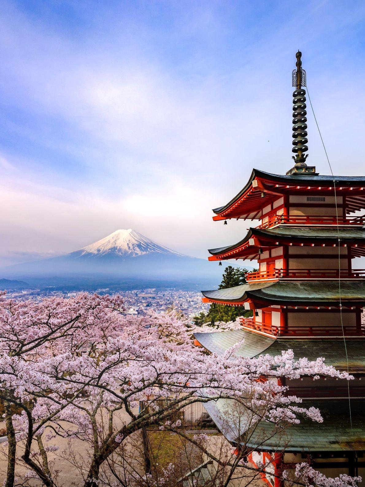 """Arakurayama Sengen Park in Fujiyoshida City, Yamanashi Prefecture has become more popular year by year for ..."