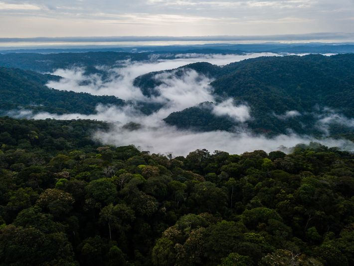 This part of Colombia is one of the most species rich regions of the world. Locals ...