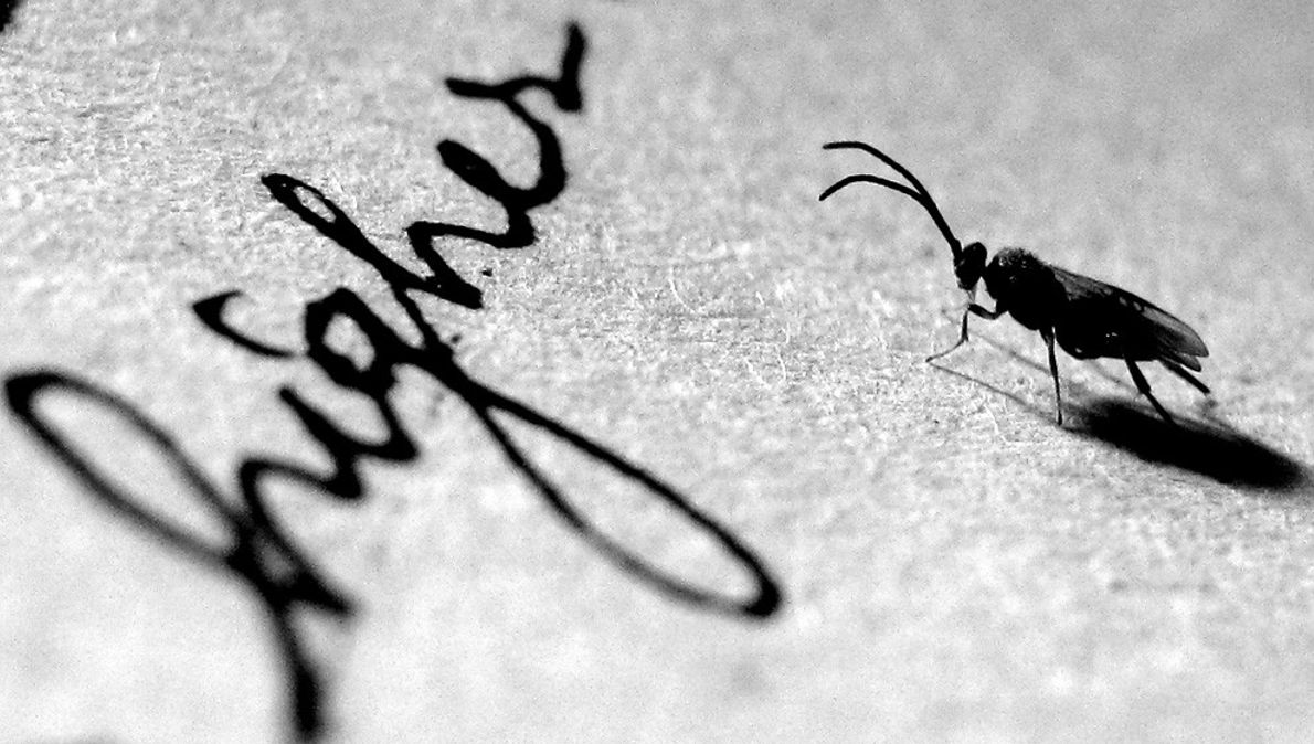 Insect on Paper