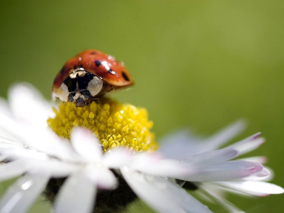 How to Take Macro Pictures
