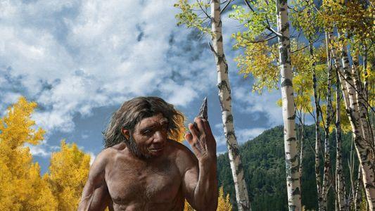 'Dragon Man' skull may be new species, shaking up human family tree