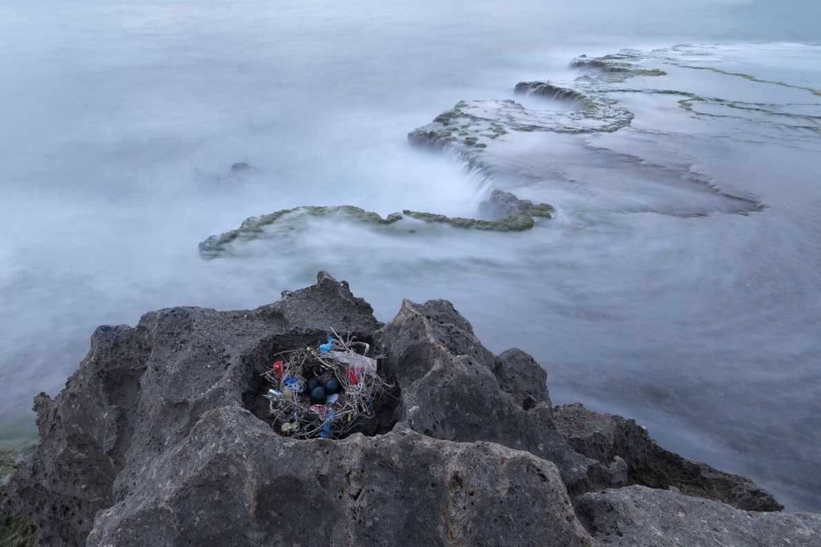 Three black eggs lie on an abandoned nest woven from plastic waste and rubbish on Israel's ...