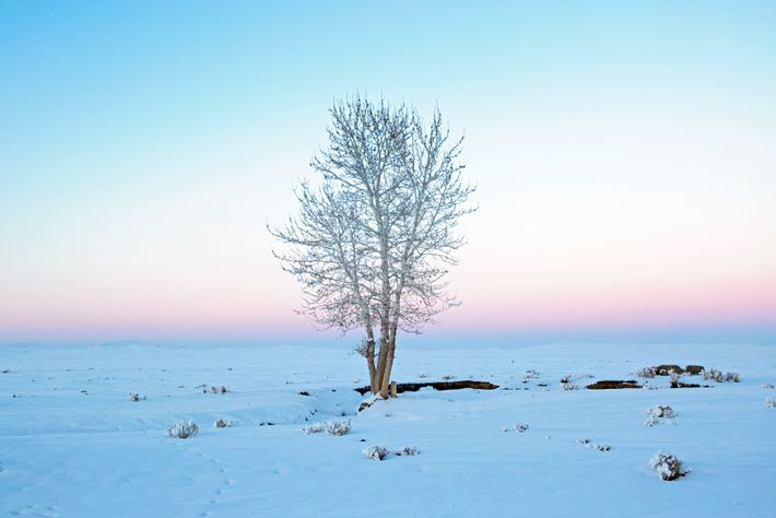 A tree, a rare site on the steppes of Mongolia, lines the road to the city ...