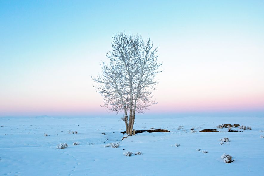 A tree, a rare site on the steppes of Mongolia, lines the road to the city of Ulaangom.