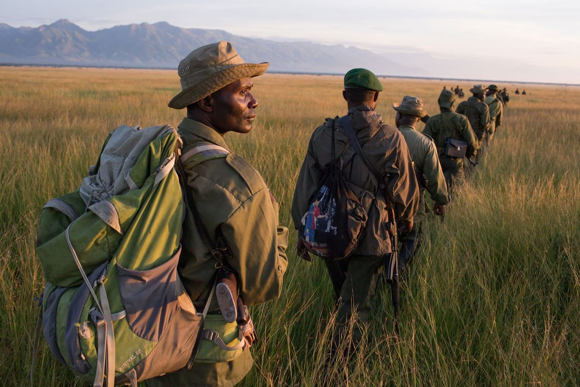 Conservation rangers and Congolese Army soldiers conduct a long range patrol to locate and destroy an ...