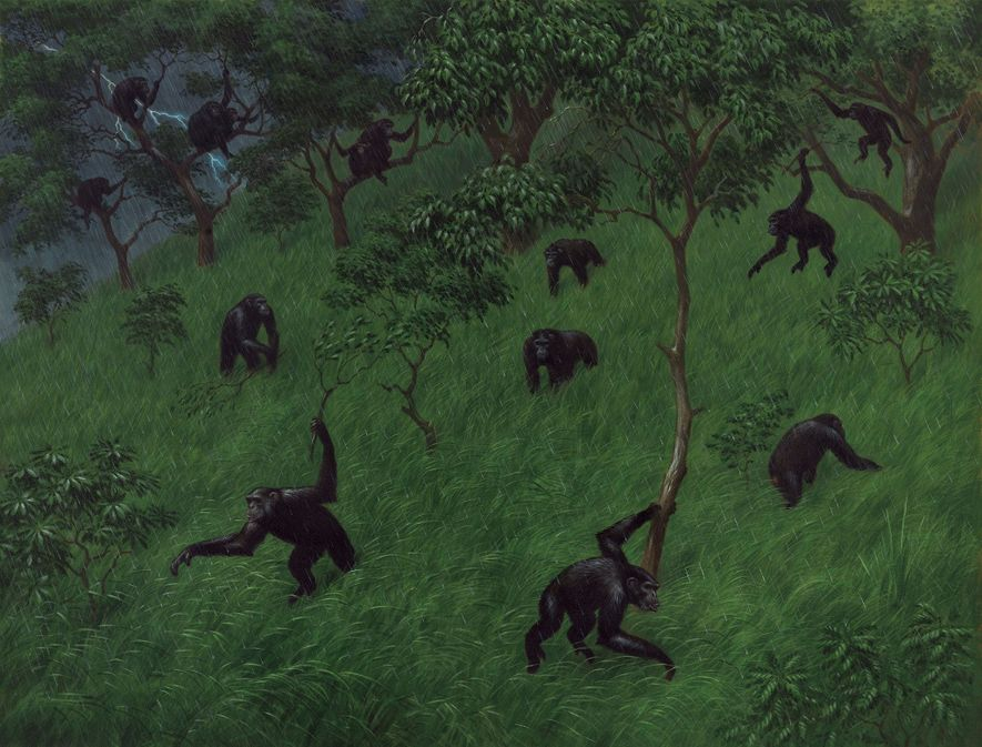 Leaping from trees and brandishing boughs, apes charge downhill in a wild rain dance.