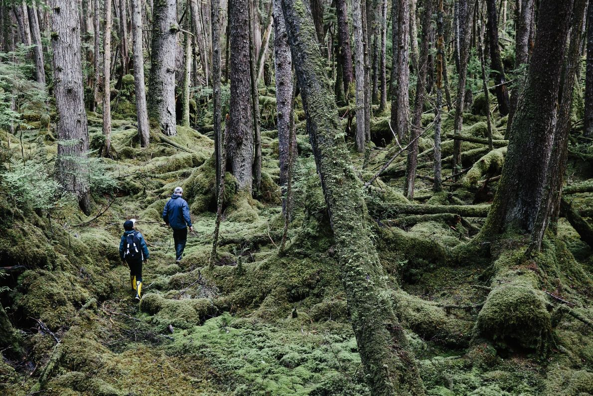8. AMONG THE TREES  British Columbia's temperate rainforest — vast swathes of bottle-green spruce, cedar and fir ...