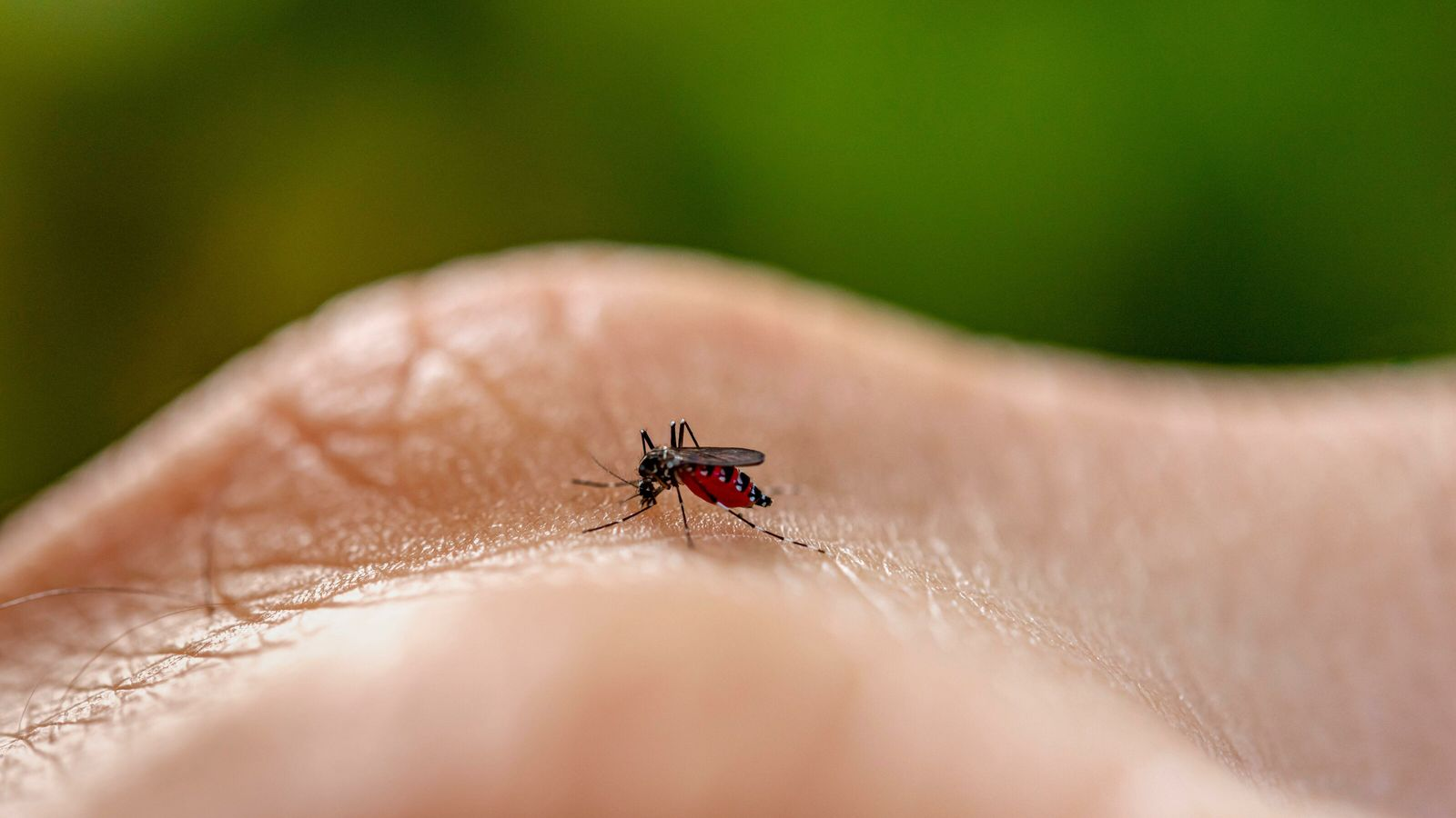 Seven warmer-weather diseases climate change may bring to the UK