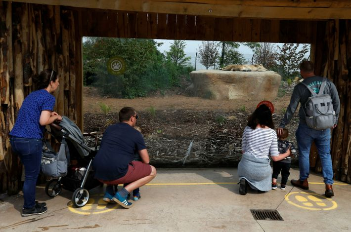 Social distancing at Chester Zoo during the summer. Whilst adapting to COVID-19 measures required investment, zoos ...