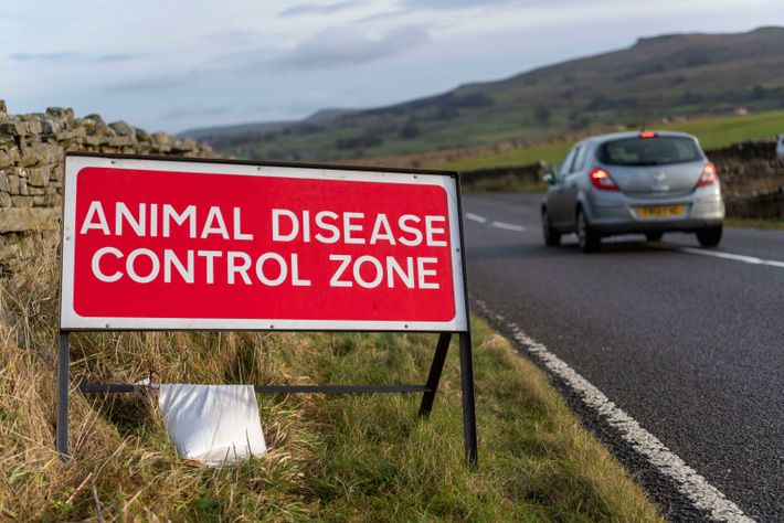 A warning sign to motorists in Wensleydale, Yorkshire, during an outbreak of H5N8 avian flu, late ...