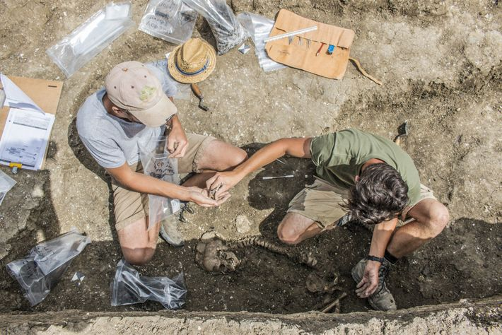 Archaeologists uncover a Bronze Age burial at Wilsford Henge, a much smaller henge just outside the ...