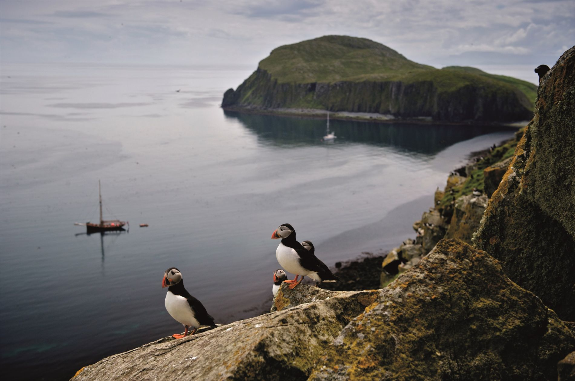Puffins on Shiant Isles