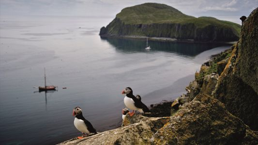 Internationally Renowned British Seabird Colony Finally Free Of Rats