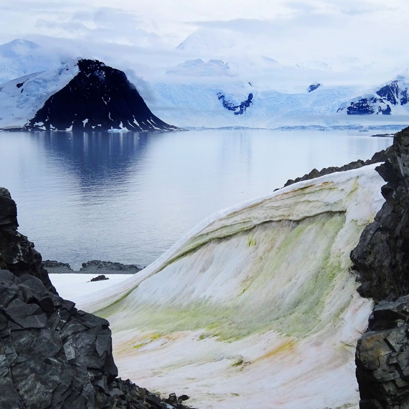 Multi-coloured algae is seen blooming in green and red on Anchorage Island, Antarctica.