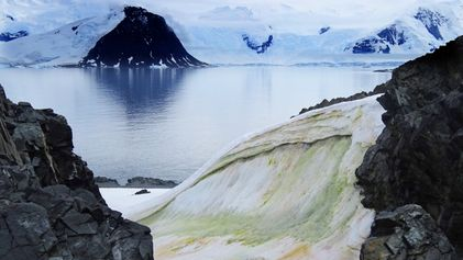 Algae is turning coastal Antarctica red and green – and it could have big implications.
