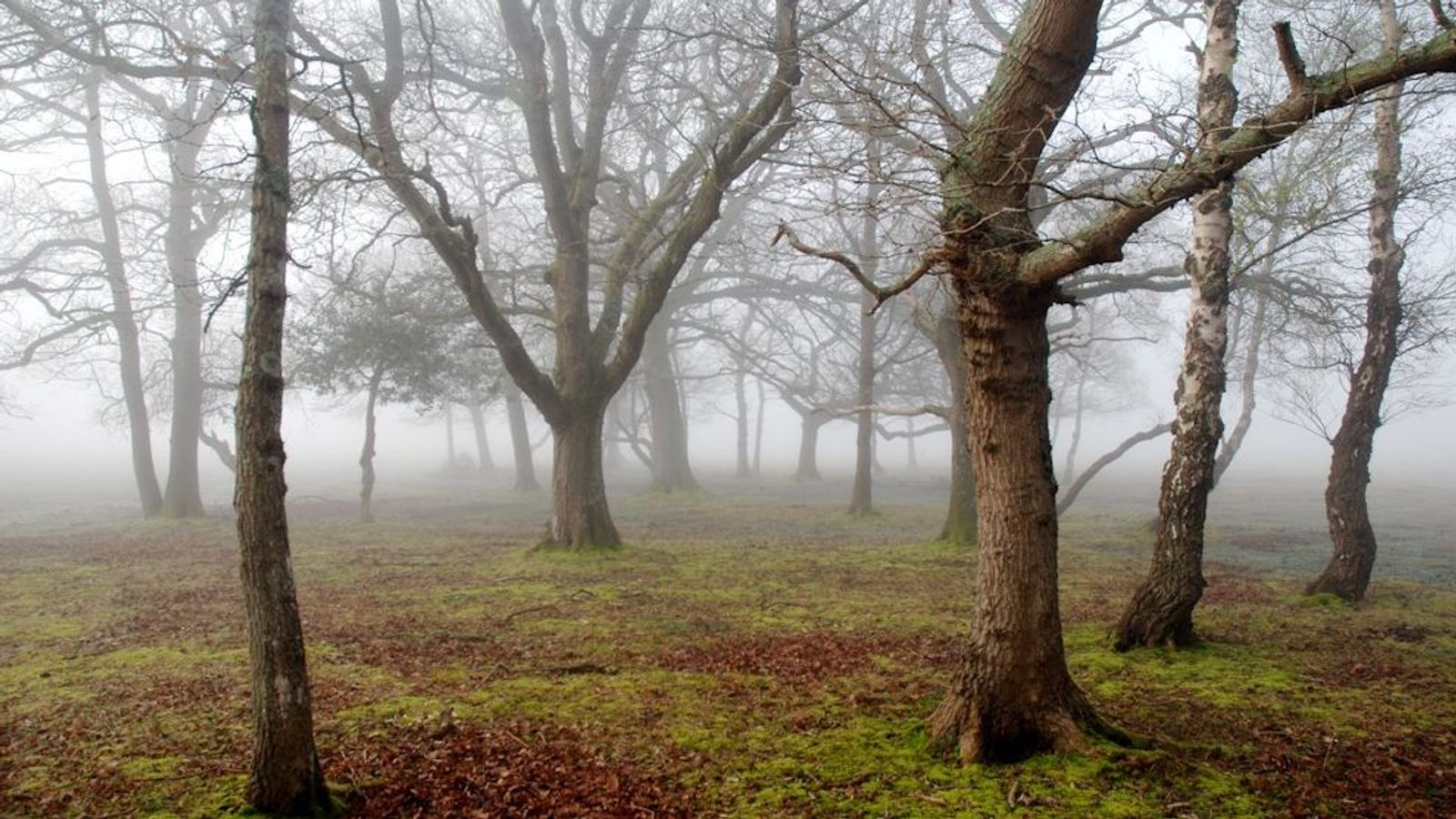 Trees are the stars in the New Forest, home to 500-year-old oaks and a yew that ...