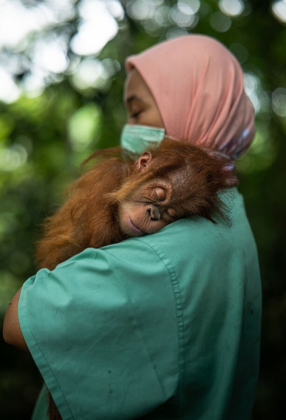 Found in a bag, her left arm broken, this baby orangutan faces a long journey to ...