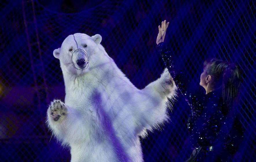 Behind netting, a polar bear dances at the Circus on Ice in Kazan, Russia.