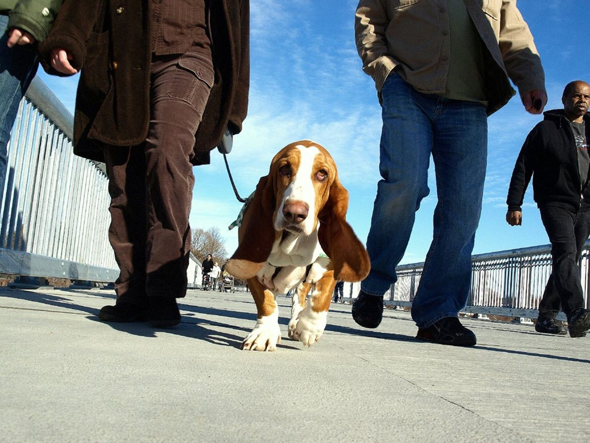 The view from a dog's eyes. Walkway over the Hudson, as spring is approaching.