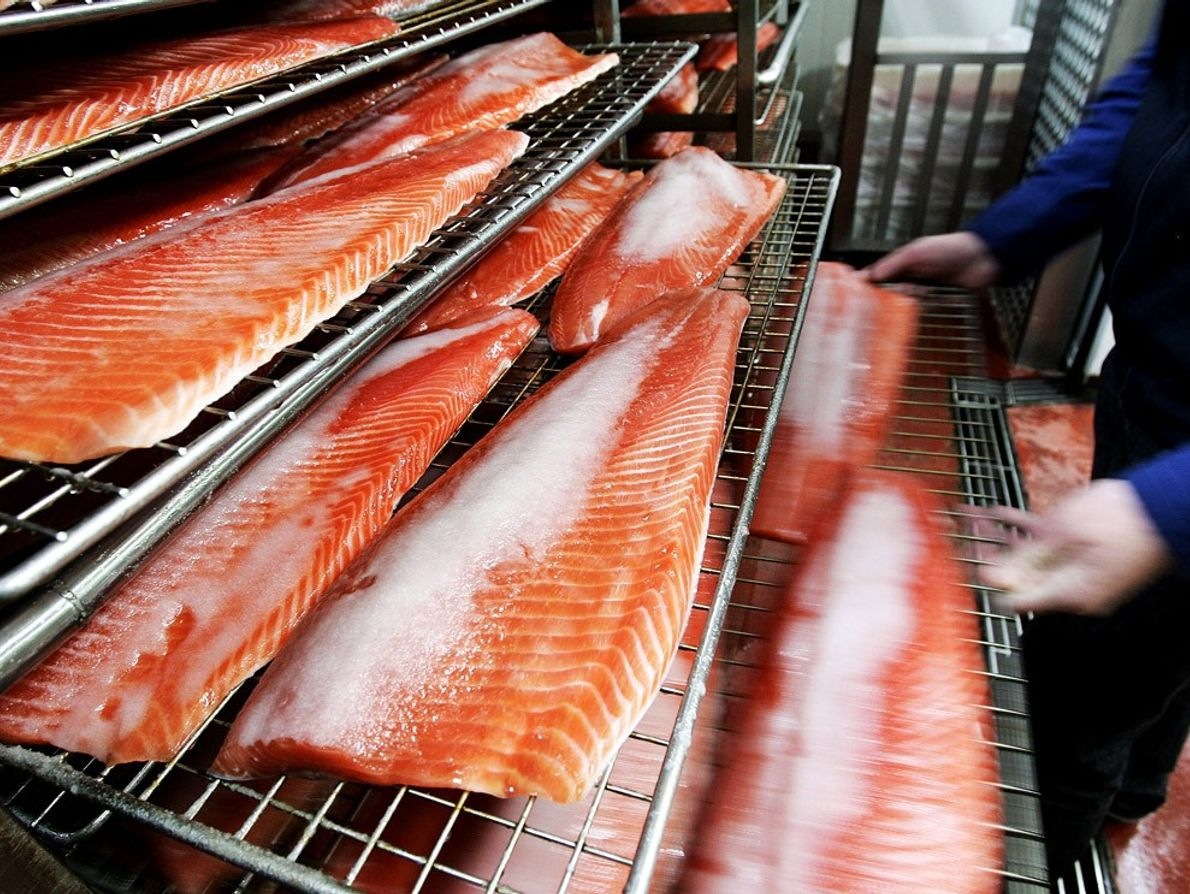 Fish Market, Tasmania