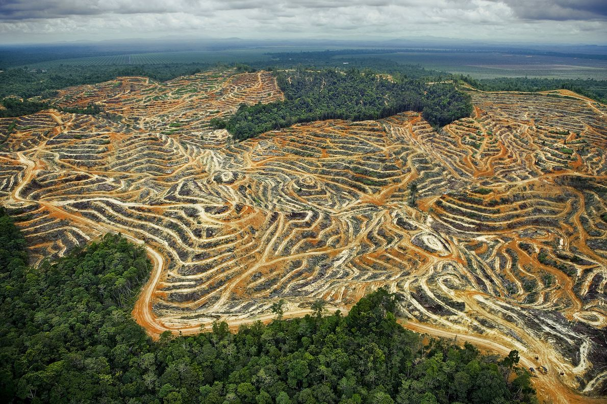 Access roads and terraced fields erase Sarawak's rolling lowlands in Malaysia.