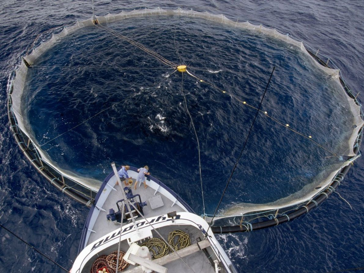 Tuna Net, Southern Ocean