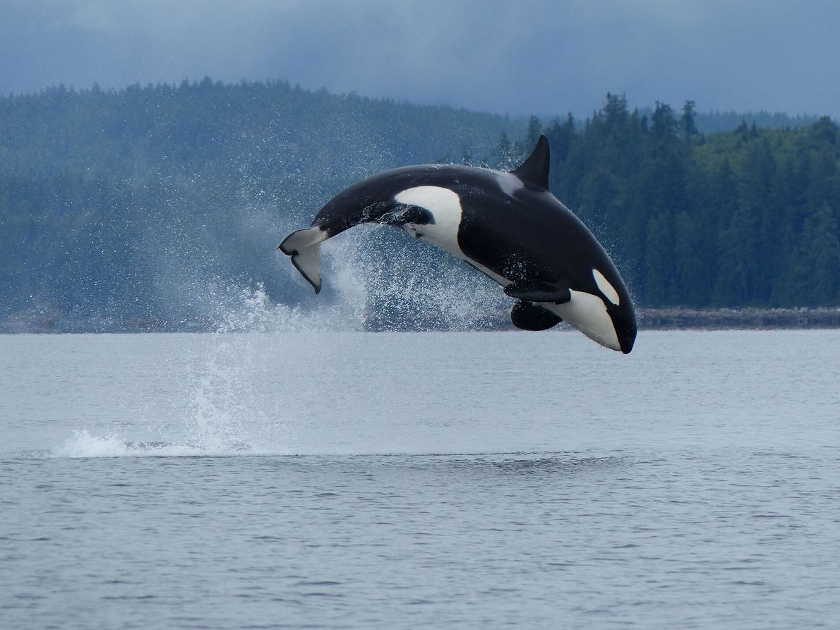 3. ON A WHALE WATCHING TOUR  Head out into the blue aboard an inflatable Zodiac and pods of ...