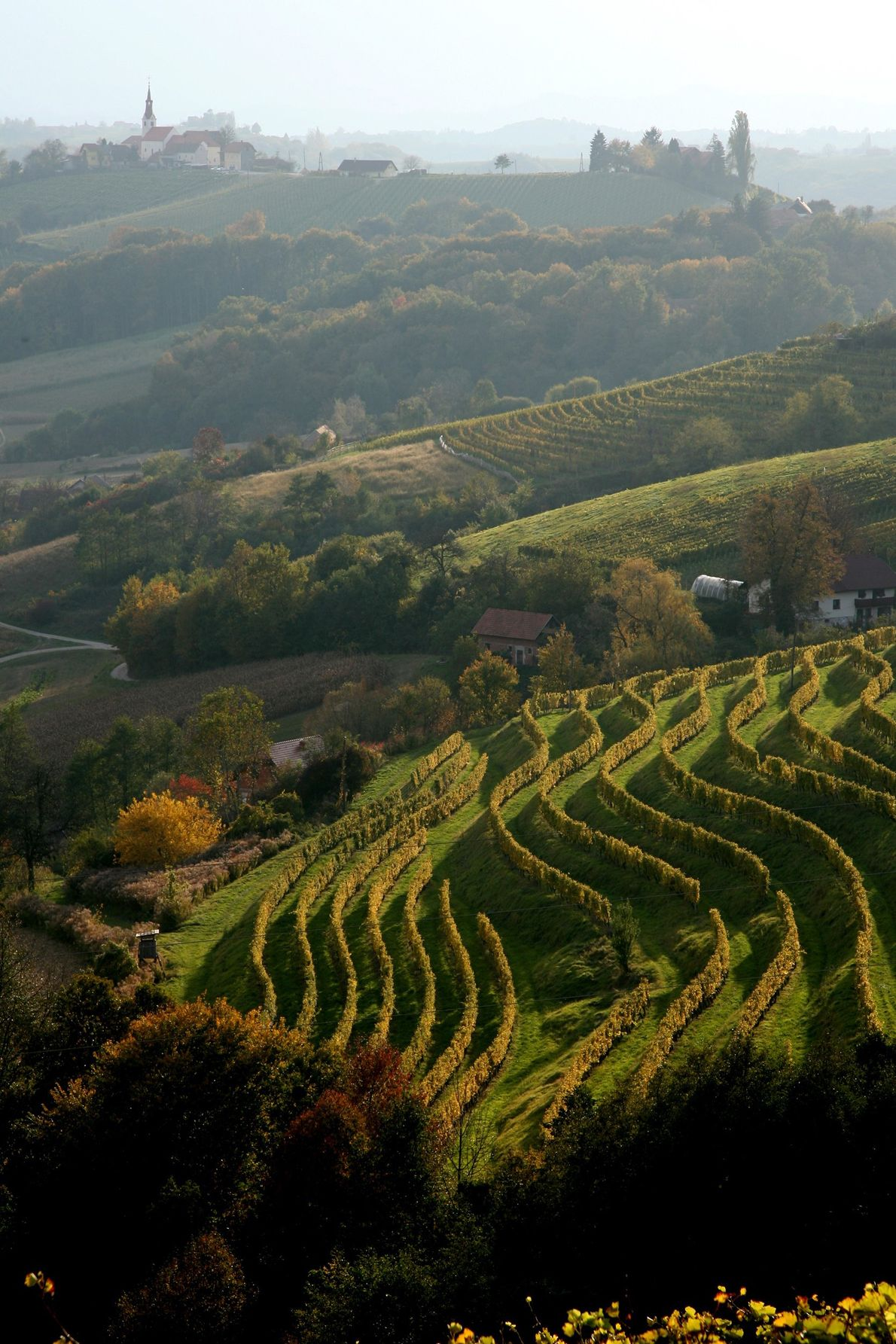Looking out over the rolling hills surrounding Jeruzalem, located in the Slovene Hills, in the north-east of ...