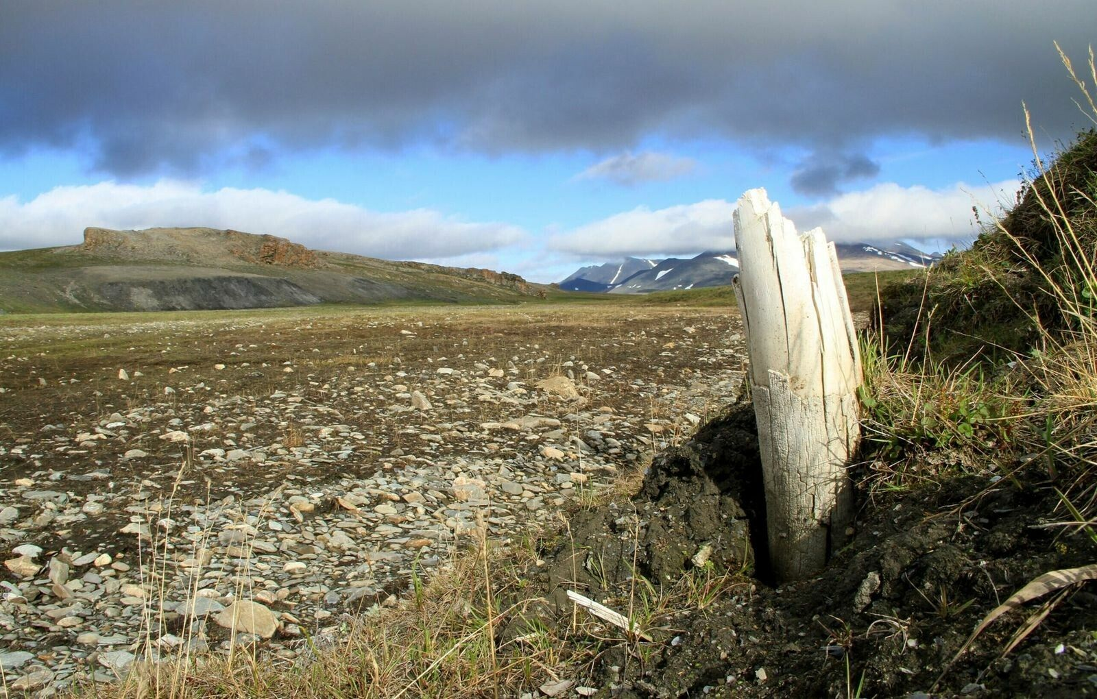 Woolly mammoth tusks sometimes emerge from the permafrost at Wrangel Island, located in northeastern Siberia. Wrangel ...