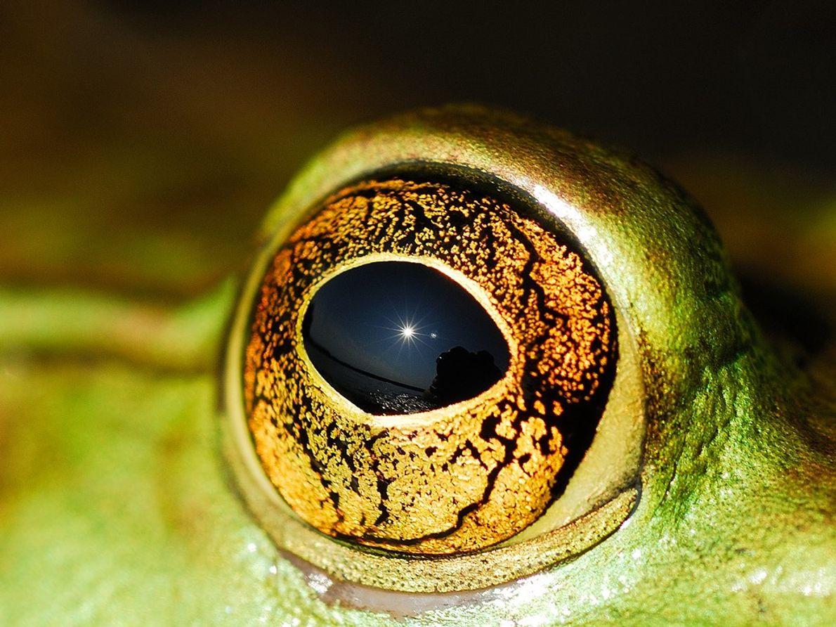 Bullfrog Eye, Ontario