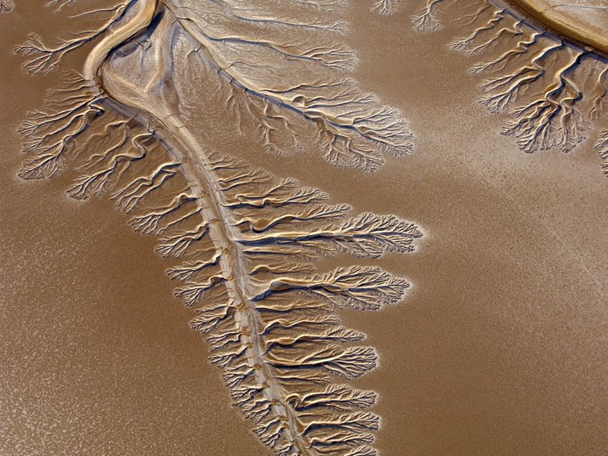 Beautiful tendrils fill the now dry Colorado River delta.