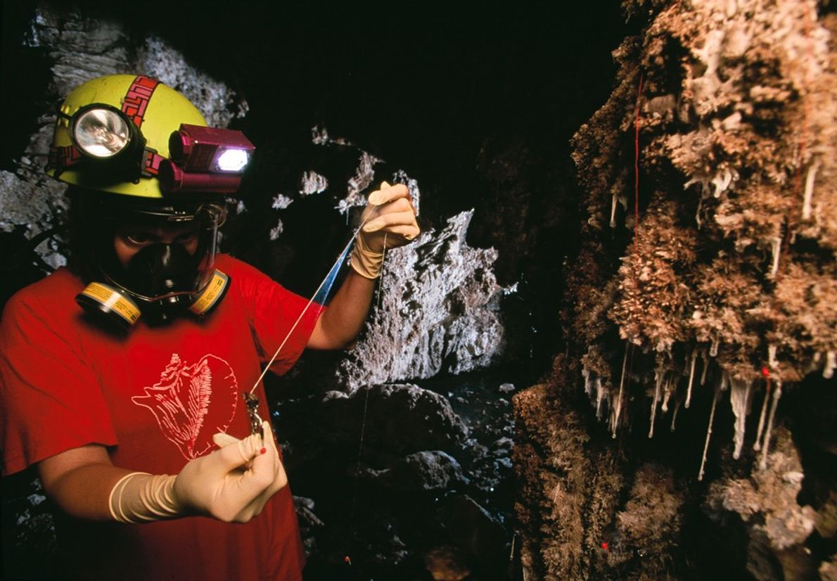 A caver examines single-celled organisms, called 'snotties', that produce a prodigious slime with a nasty kick-an ...
