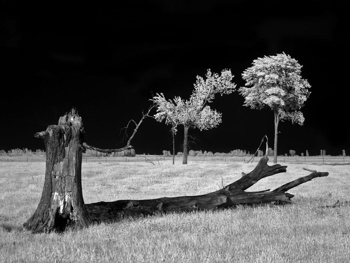 Buena Vista Grasslands, Wisconsin