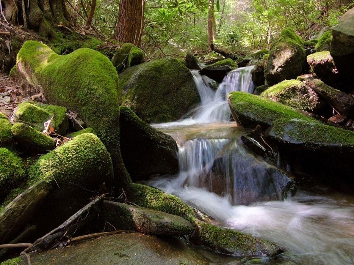 Stream, North Carolina