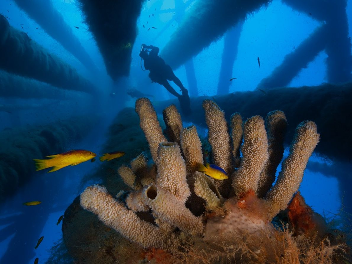 Tube Sponges, Gulf of Mexico