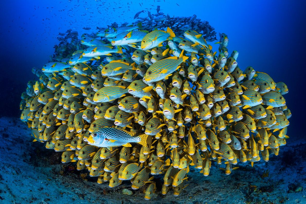 Taken off the island of Pulau Gam in Indonesia, this image by accomplished underwater photographer Gabriel ...
