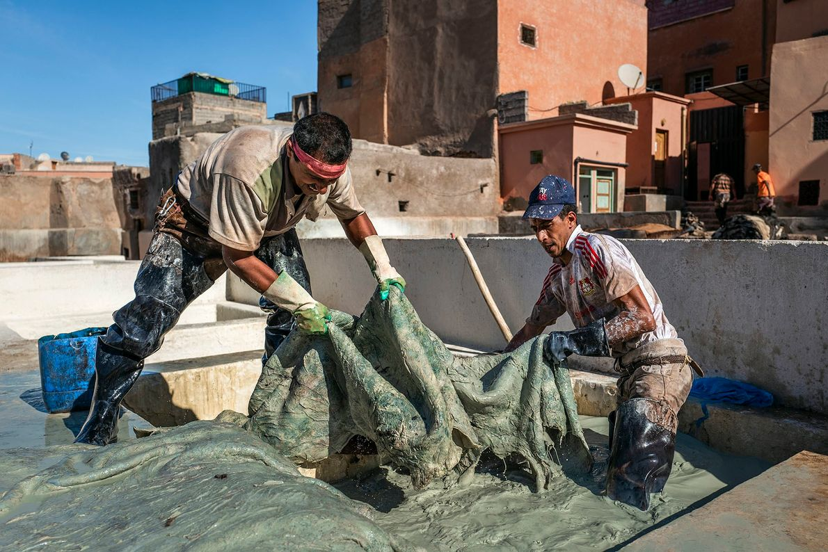 Tanners handle a large hide during one of the first stages of the process. Skins are ...