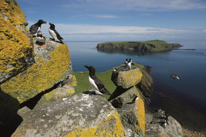 Seabirds on Shiant Isles
