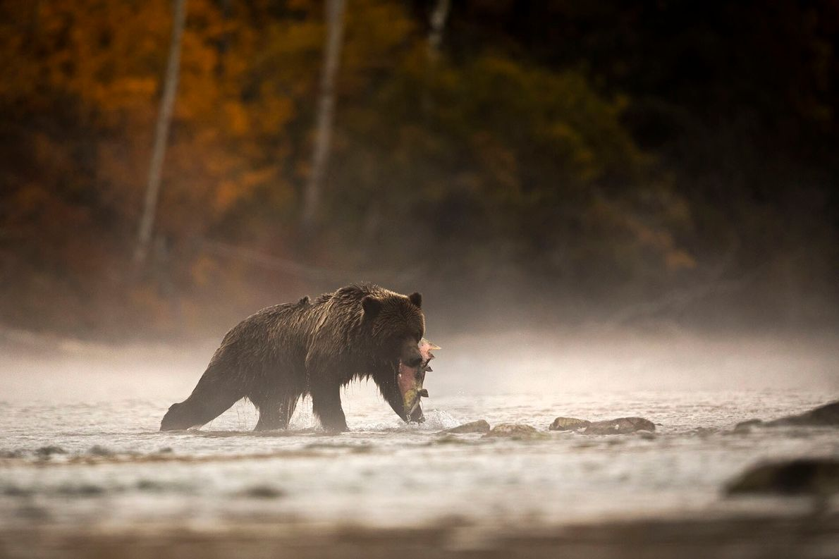 WILDLIFE WATCHING   British Columbia's central coast is home to one of the largest temperate rainforests in the ...
