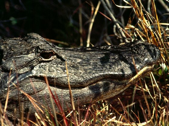 In pictures: Crocodilians around the world, from the tiny to the terrifying