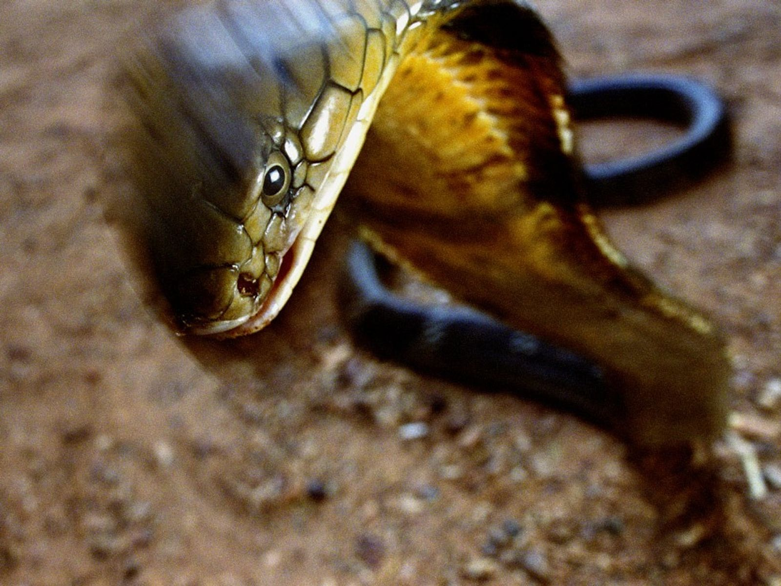 Images of extraordinary snakes