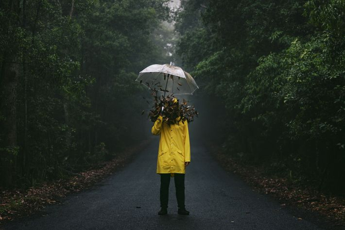 """""""During a misty morning adventure in New South Wales, Australia we came across this dark road ..."""