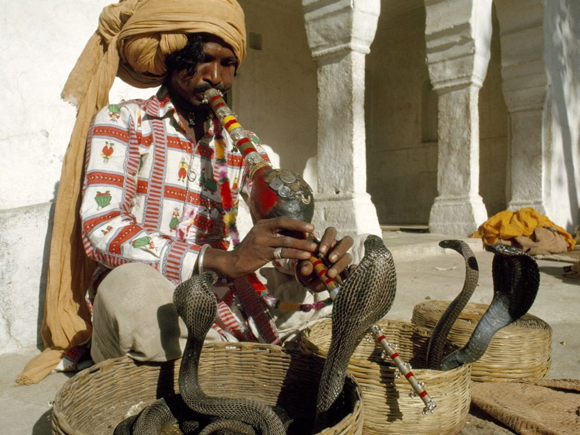 Although still performed in India, other parts of Asia, and North Africa, snake charming as a ...