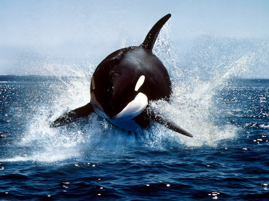 Images of Antarctica's most charismatic wildlife