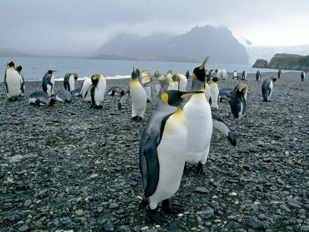 Penguins in their southern habitat