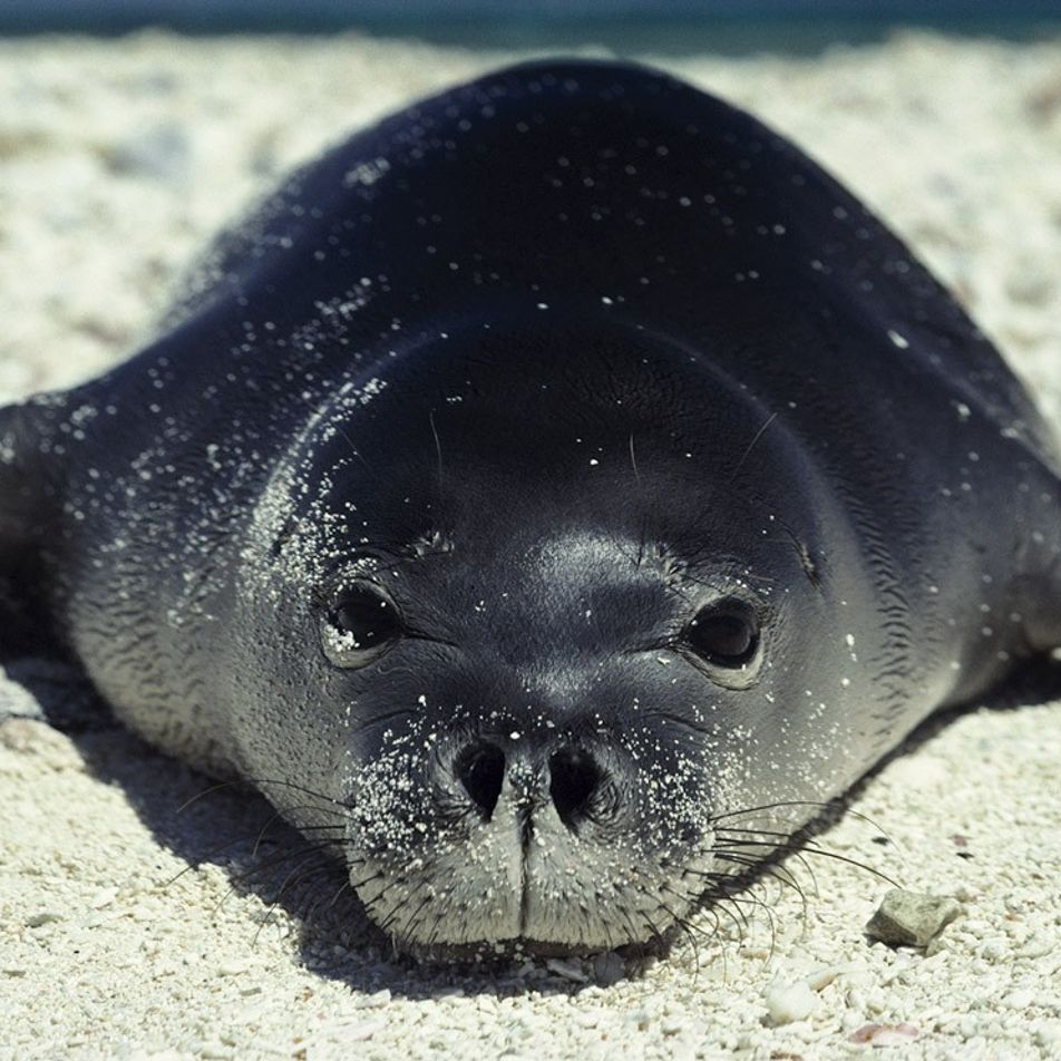 Adorable images of seals and sea lions around the world