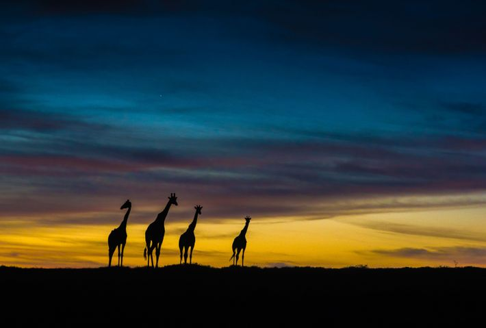 """""""The experience of observing an absurdly stunning twilight, turned into an unforgettable photographic experience when this ..."""