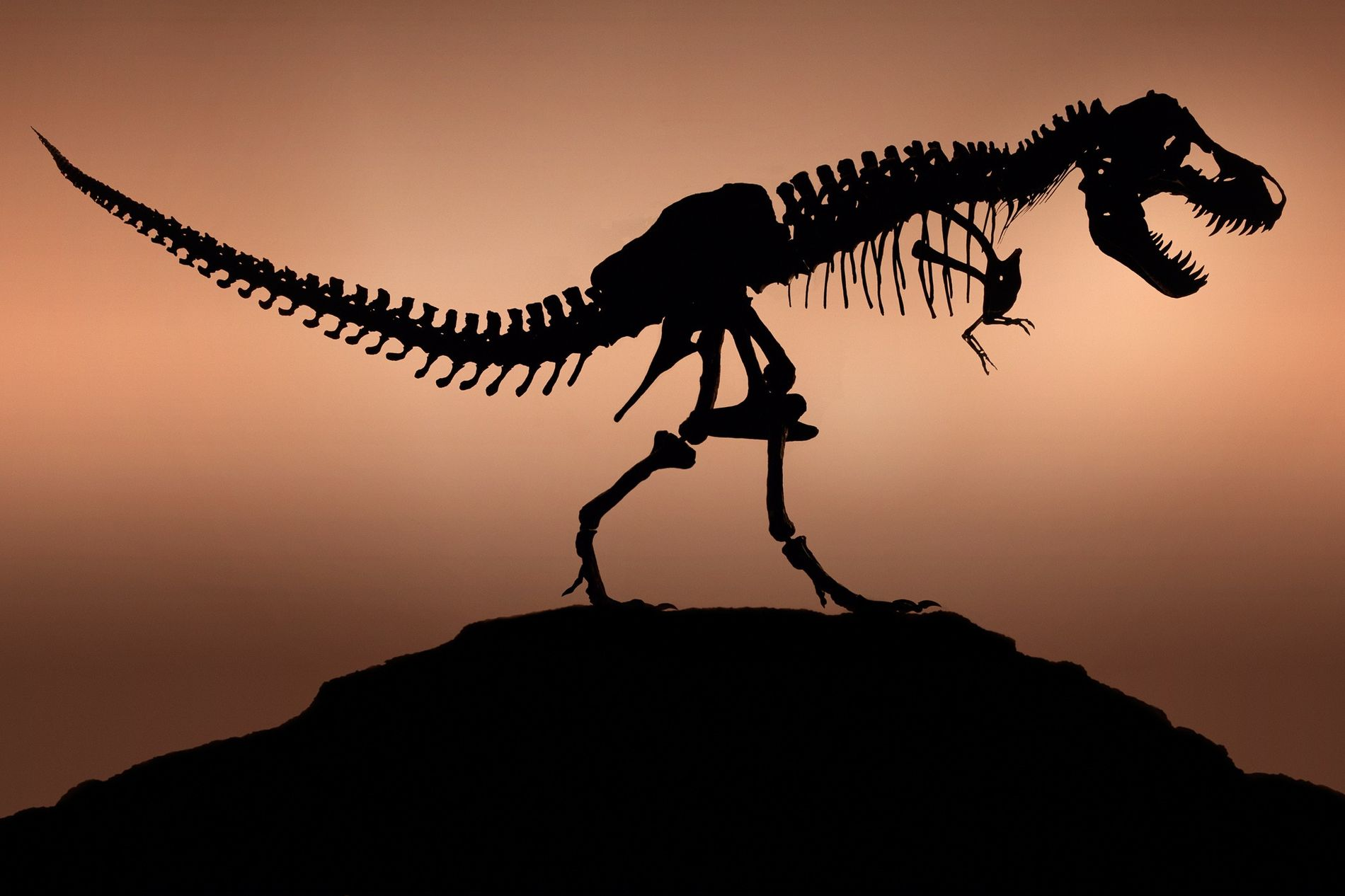 Did the Real T. Rex Resemble the One in Jurassic Park?